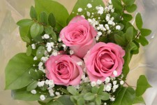 floral-3x-pink-roses