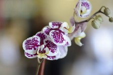 floral-orchid-flower4